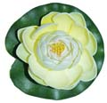 Fancy Floral Small Floating Lotus - White