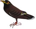Bird Brown